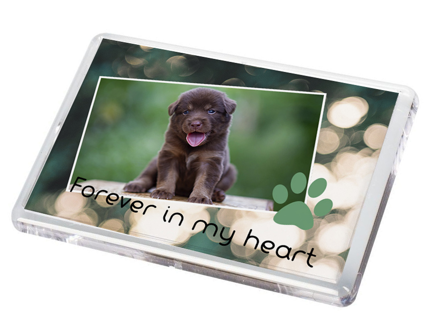 Pet Fridge Magnet 3