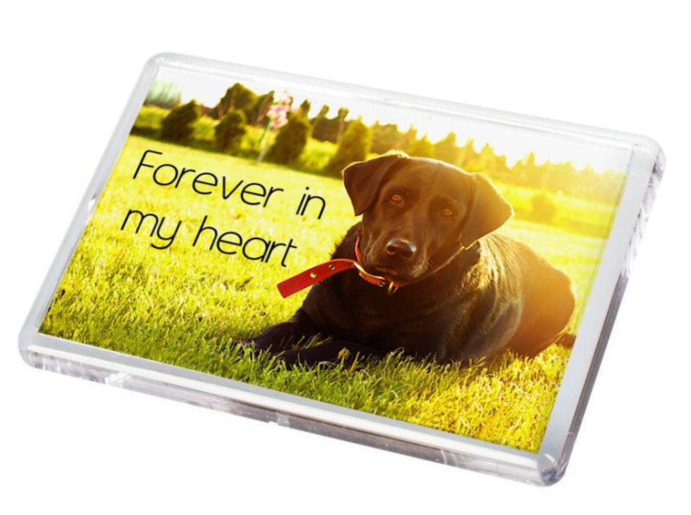 Pet Fridge Magnet 7.psd